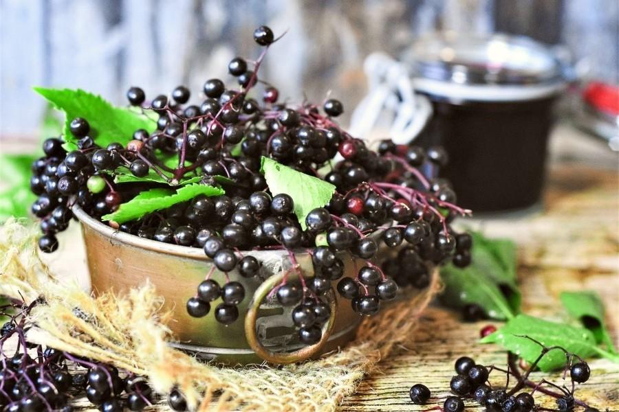Elderberry: Health Benefits