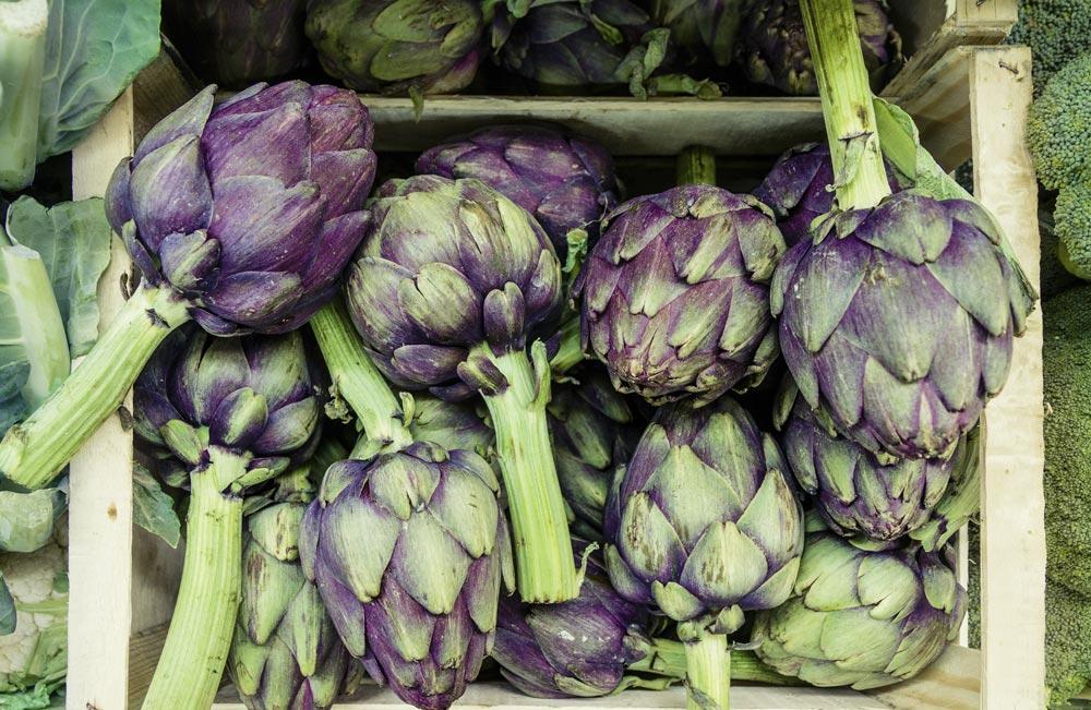 Probiotics in artichokes