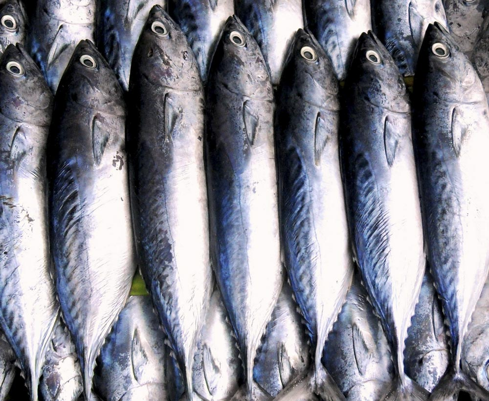 Vitamin A is found in fish